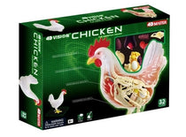 4D Vision Chicken Anatomy Model by Tedco Toys