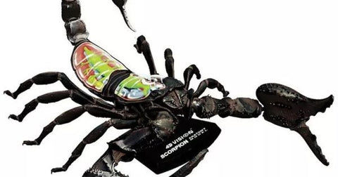 4D Vision Scorpion Anatomy Model by Tedco Toys