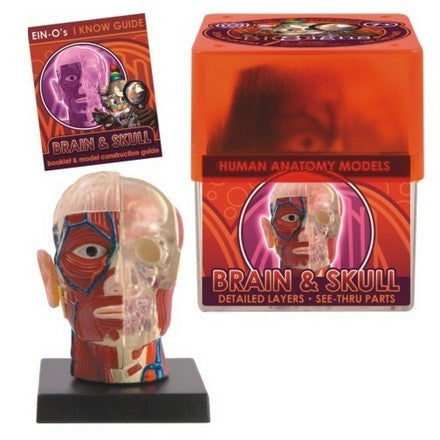 BioSigns Brain and Skull by Tedco Toys