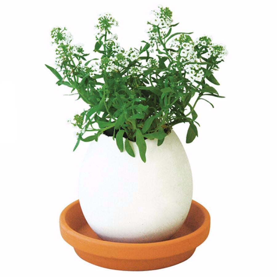DIY Lucky Egg Pot Plants