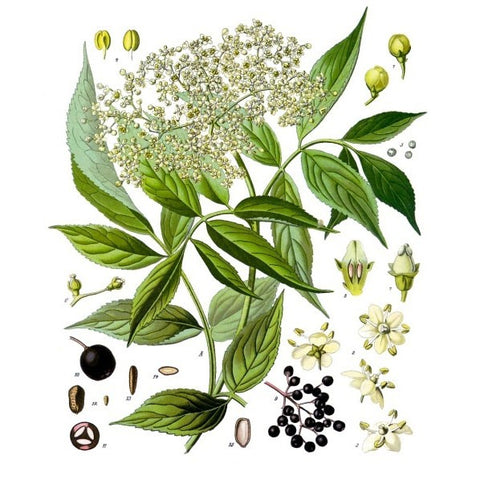 Elderberry Elixir Tincture