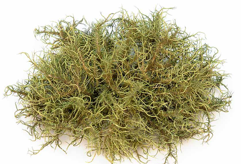 Usnea Double Extraction Tincture