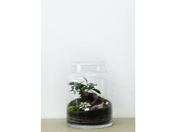 Green Factory - Flat Medium | Ficus