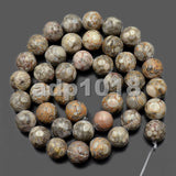 "Natural Flowery Cowry Fossil Gemstone Round Loose Beads on a 15.5"" Strand"