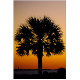 Palmetto Sunset | Charleston, SC | Premium Canvas Gallery Wrap