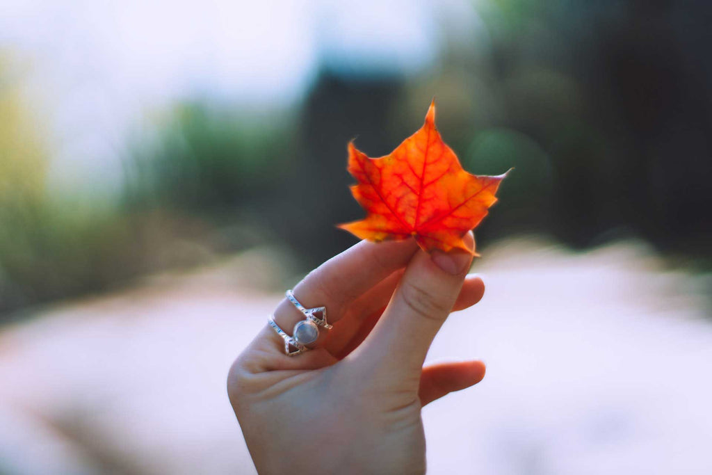 Hand with ring on finger holding up an autumn leaf