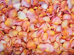 Freeze Dried Rose Petals - Citrus