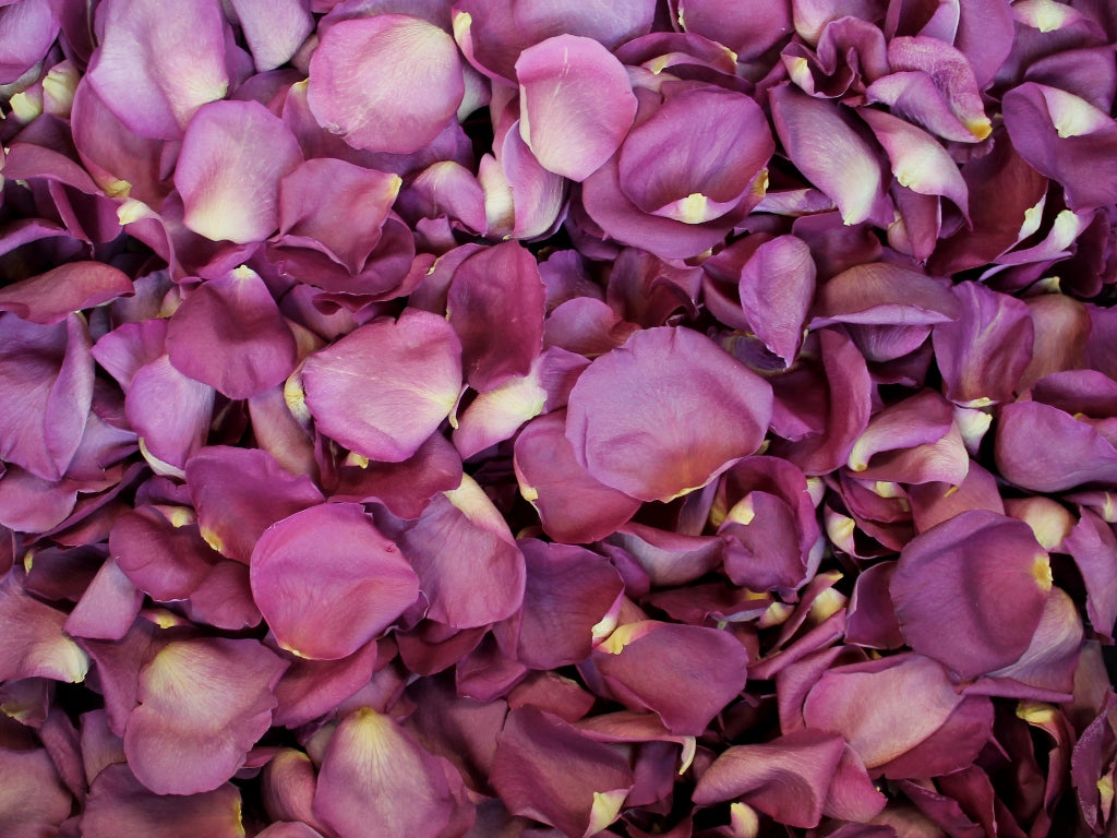 Freeze Dried Rose Petals - Gemstone
