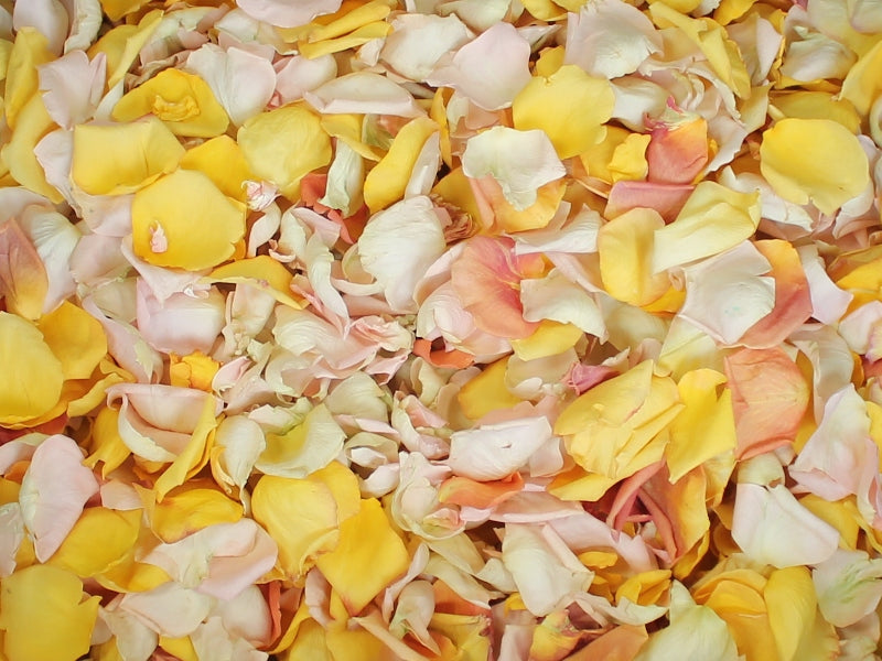 Rose Petals, Real Freeze Dried Petals in Blush, Ivory, Yellow, and Peach for Pathways, 70 cups