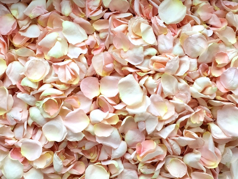 Freeze Dried Rose Petals - Blush