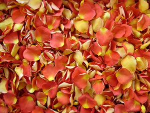 Freeze Dried Rose Petals - CandyCorn
