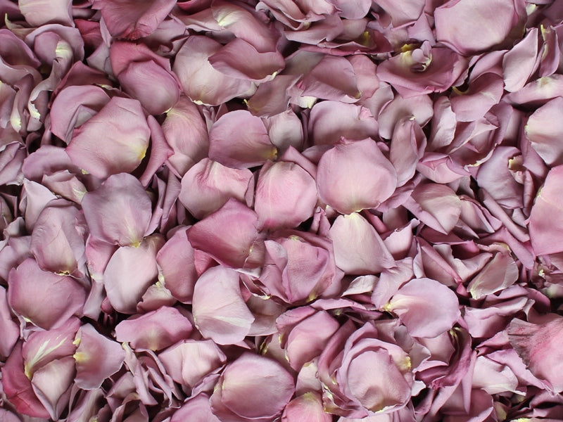 Freeze Dried Rose Petals - Dusty Purple