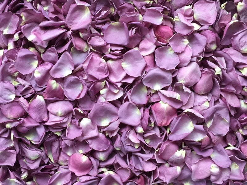 Freeze Dried Rose Petals - Lilac