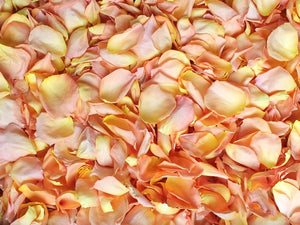 Freeze Dried Rose Petals - Peach Kiss