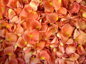 Freeze Dried Rose Petals - Pumpkin