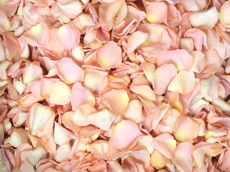 Freeze Dried Rose Petals - Seashell