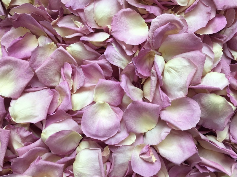 Freeze Dried Rose Petals - Whisper