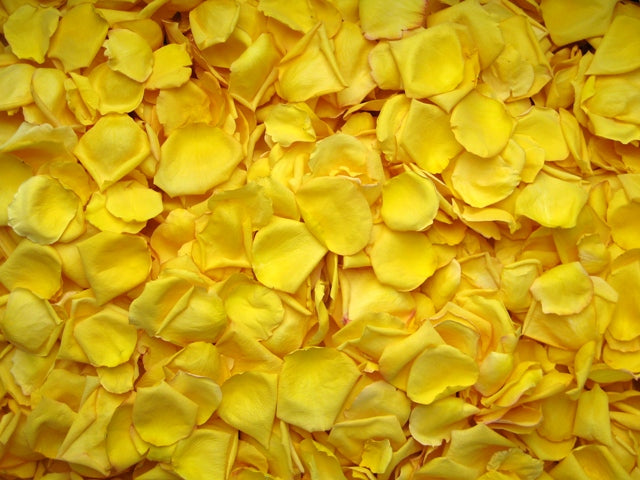 Freeze Dried Rose Petals - Yellow