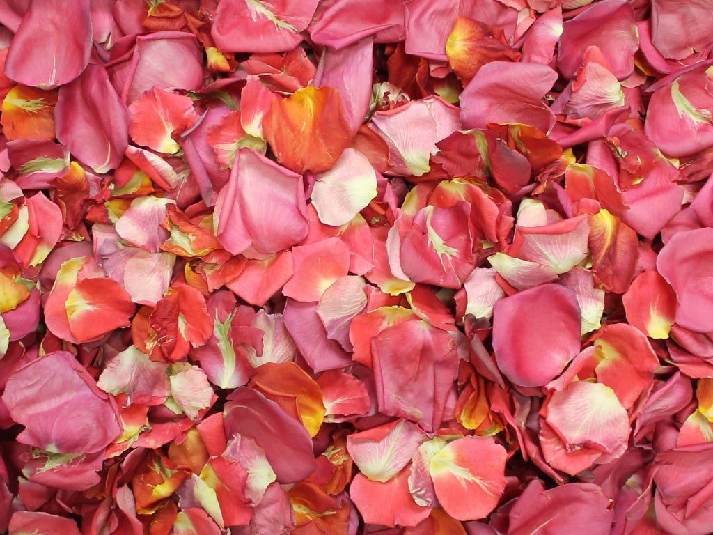 Rose Petals, Real Freeze Dried Pink and Orange Petals for Pathways, 70 cups