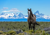 Patagonia Workshop October 29 - November 10th, 2019 (Waitlisted)