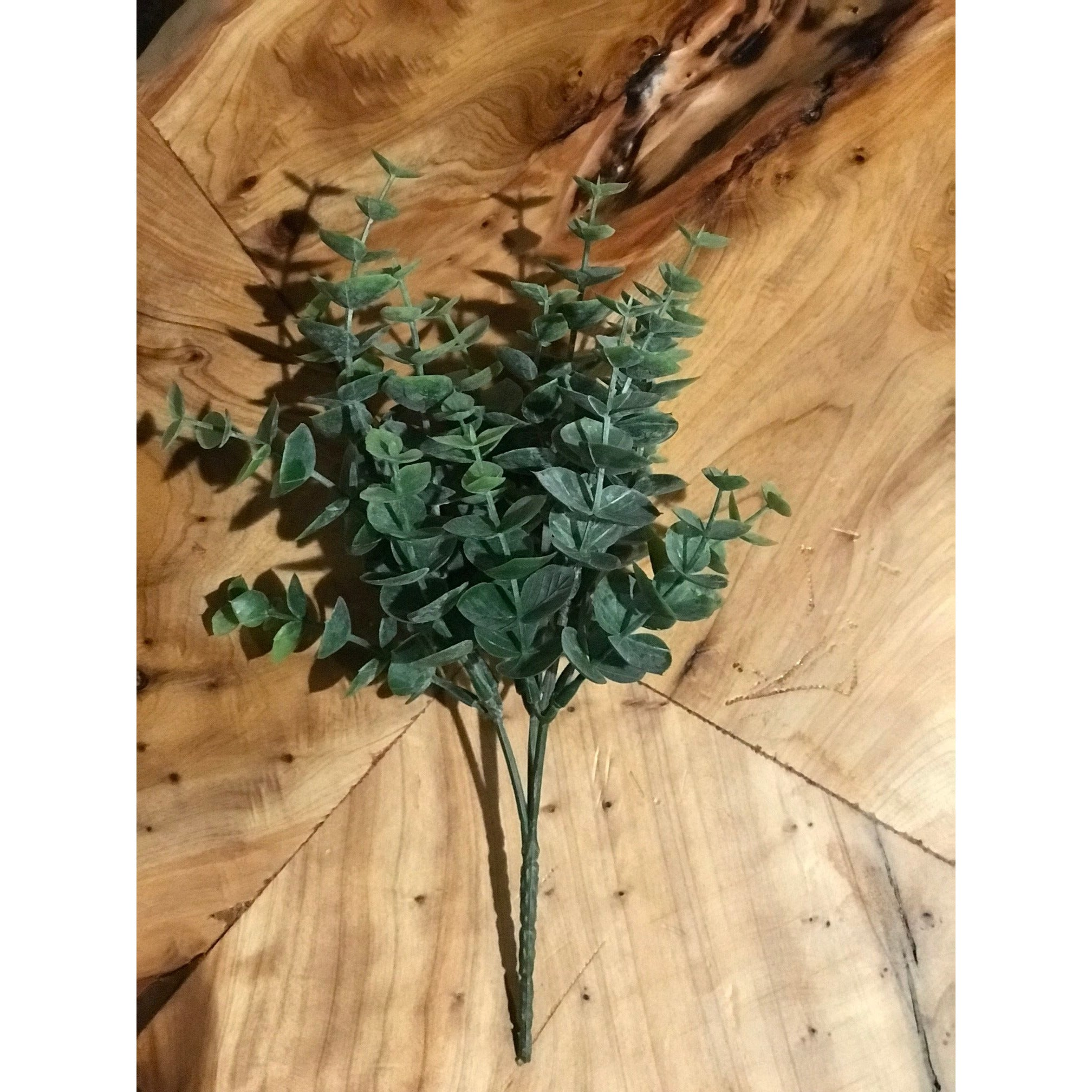 Mini Eucalyptus Bush