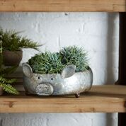 Adorable Pig Containers/Planters
