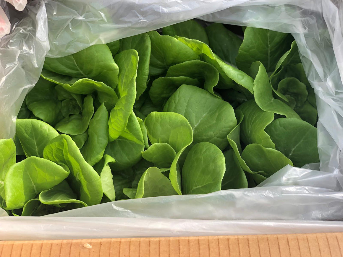 Lettuce: Butterhead Only Box (6 heads) | Hydro Living Lettuce Box