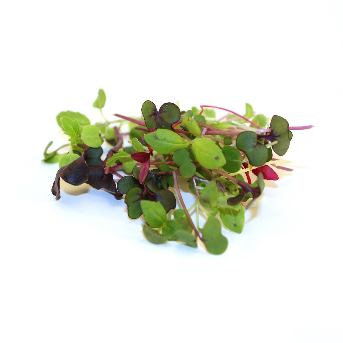 Microgreens: Rainbow Mix - 2oz