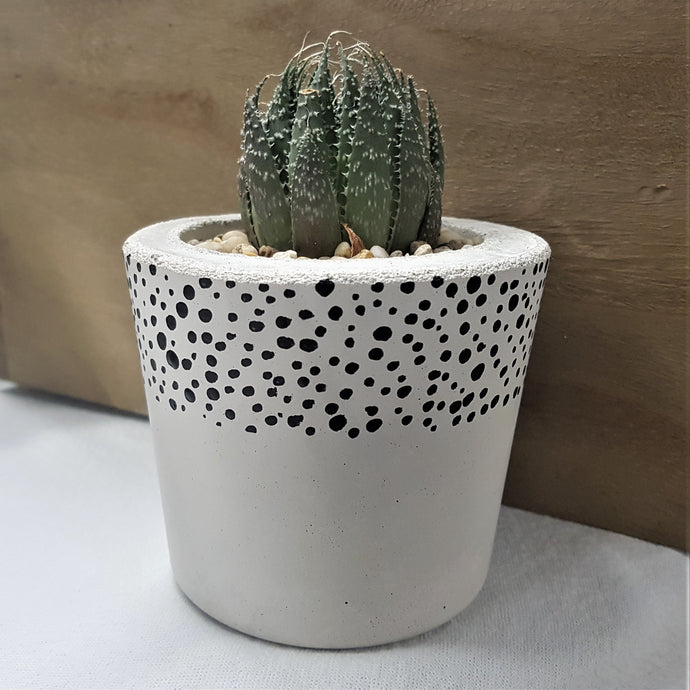 Spotty concrete indoor planter