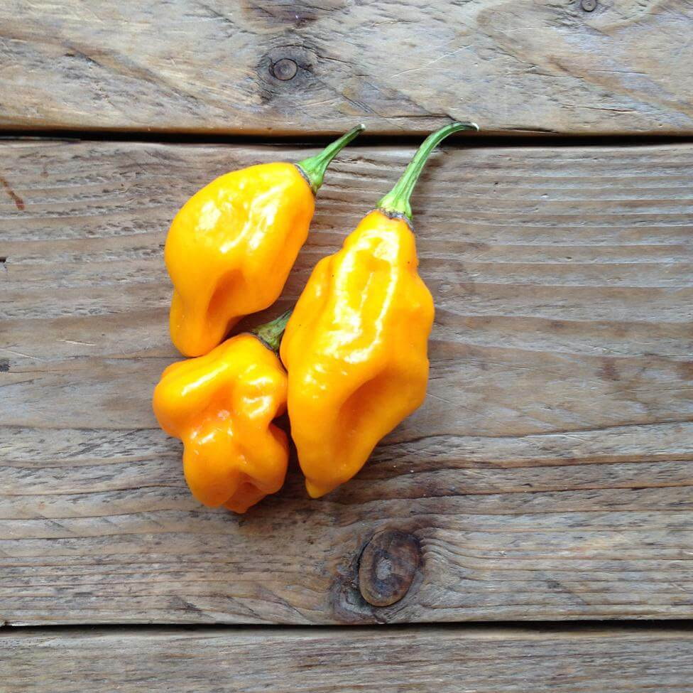 Chili Habanero Lemon