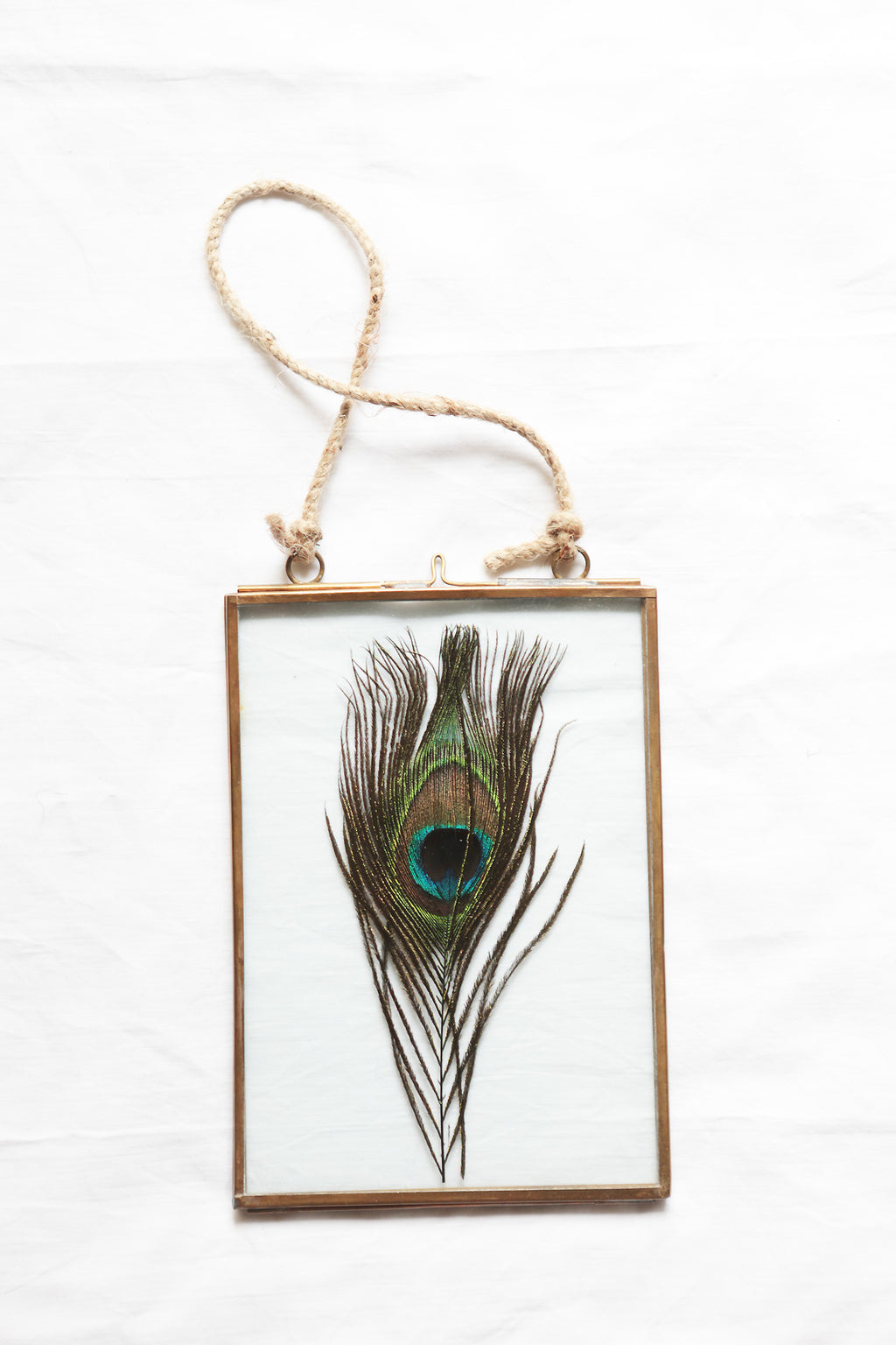 Gold frame & peacock feather