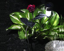 Red Rose Solar Light On A Garden Stake = Metal Art By Practical Art: LED light is on casting light on the ornamental metal vine with hand-etched leaves and the bright greens of the live green foliage in the background