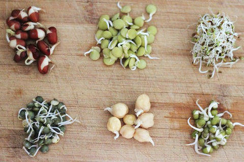 Different sprouted grains Early Foods