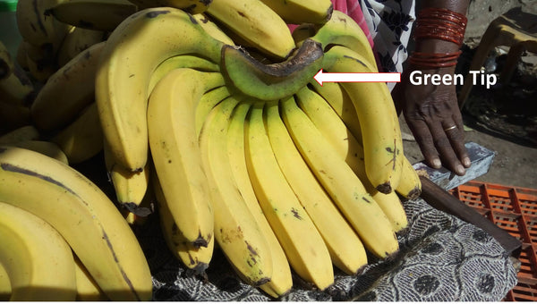 Selecting Bananas - Early Foods - Conscious Eating