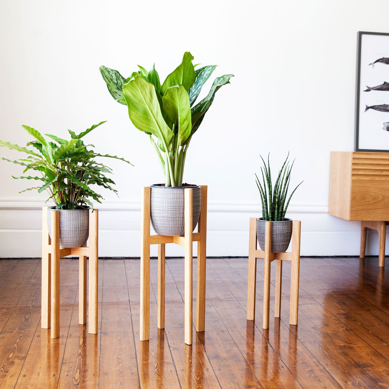 Mid Century Style Modern Plant Stands In 3 Sizes Nick James Design