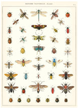 Natural History of Insects Vintage Poster