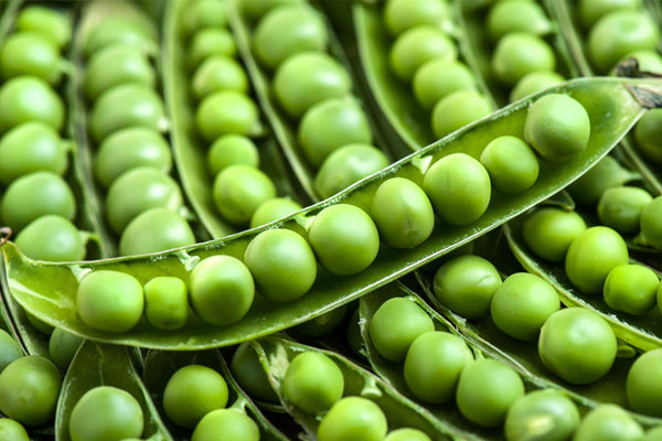 How Green Peas Impact Our Health
