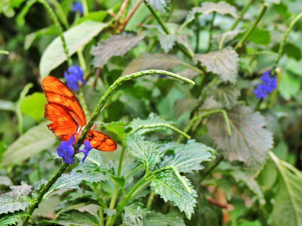 We went to Butterfly World!