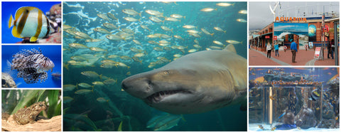 Wheelchair Friendly Places in Cape Town, Two Oceans Aquarium