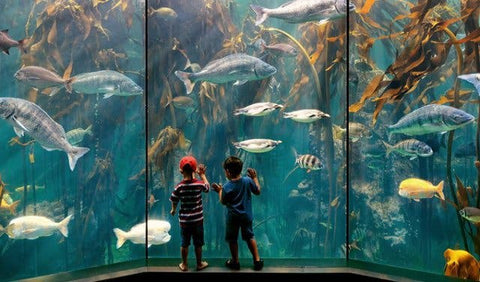 Image courtesy of Two Oceans Aquarium