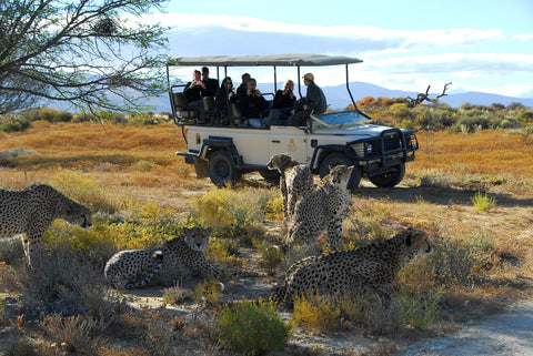 Safari In Cape Town, Tourist Attractions