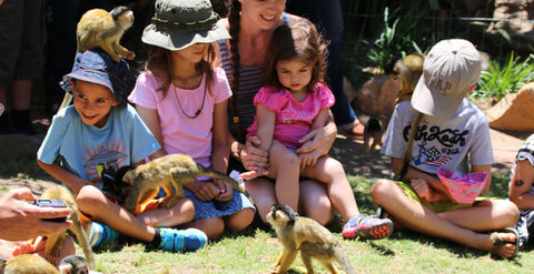 Activities For Kids In Cape Town, World Of Birds