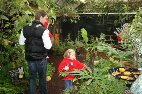 Butterfly World, Things For Kids To Do In Cape Town