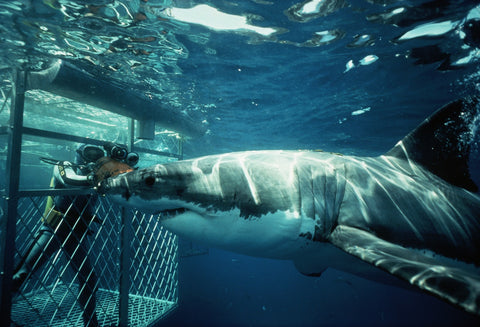 What to do in cape town's winter, shark cage diving