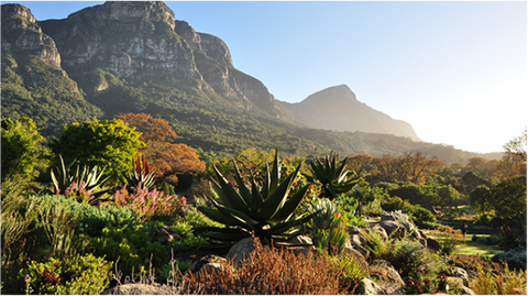 Wheelchair Friendly Places In Cape Town, Kirstenbosch National Botanical Gardens