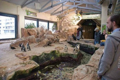 Penguins at Two Oceans Aquarium
