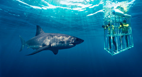 Cape Town Shark Cage Diving