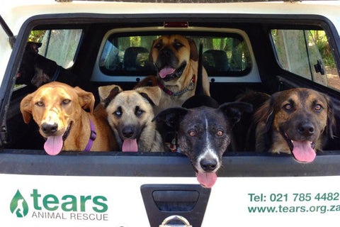 TEARS Animal Rescue Volunteer Cape Town