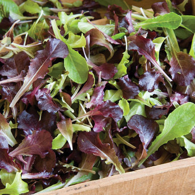 Wildfire Lettuce Mix Seeds (Lactuca sativa)