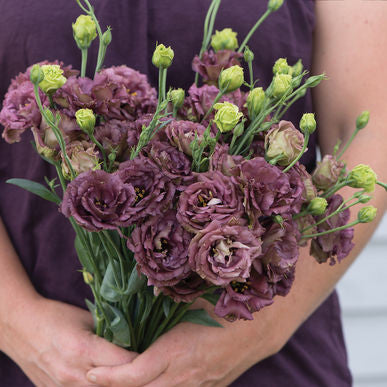 Rosanne Deep Brown Lisianthus Seeds (Eustoma grandiflorum) + FREE Bonus 6 Variety Seed Pack - a $30 Value!